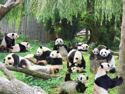 6D5N(GDCAF-2)China Chengdu / Dujiangyan / Leshan / Mount Emei + Chengdu Research Base of Giant Panda Breeding